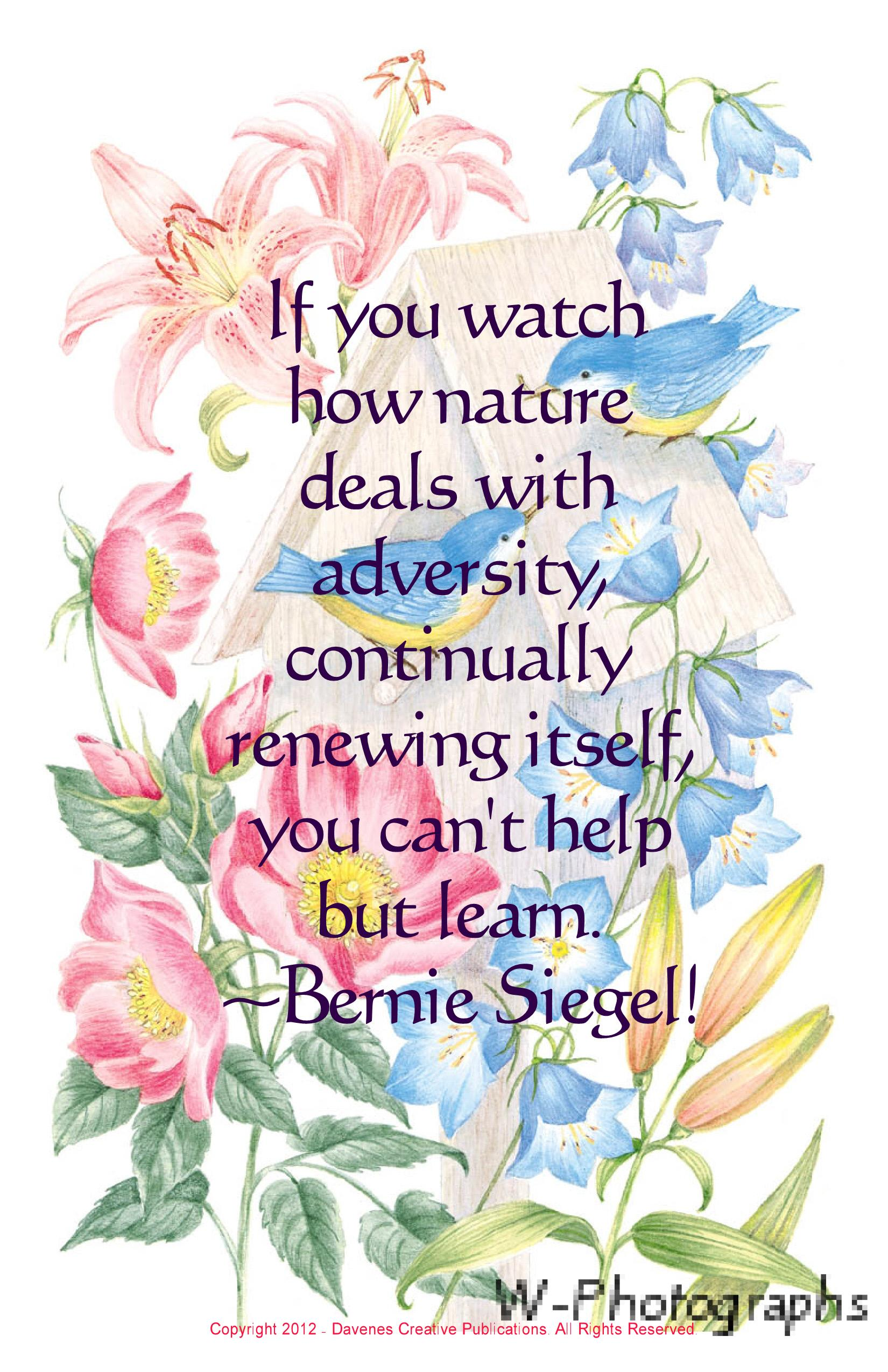 If You Watch How Nature Deals With Adversity, Continually Renewing Itself, You Can't Help But Learn. - Bernie Siegel