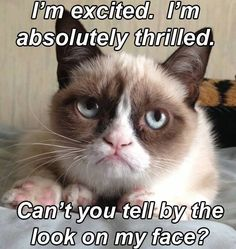 I'm Excited. I'm Absolutely Thrilled. Can't You Tell By The Look On My Face. ~ Cat Quotes