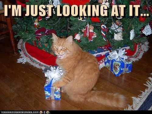 I'm Just Looking At It. ~ Cat Quotes
