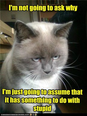 I'm Not Going To Ask Why I'm Just Going To Assume That It Has Something To Do With Stupid. ~ Cats Quotes