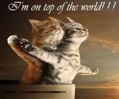 I'm On Top Of The World. ~ Cat Quotes