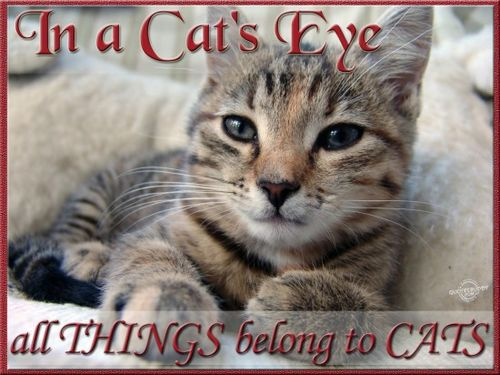 In A Cat's Eye All Things Belong To Cats.