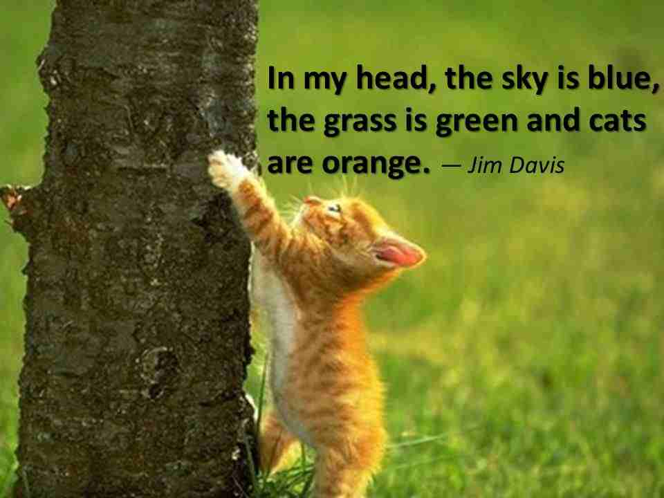 In My Head, The Sky Is Blue, The Grass Is Green And Cats Are Orange. - Jim Davis