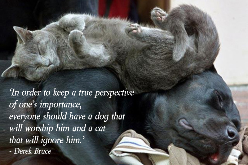 """' In Order To Keep A True Perspective Of One's Importance, Everyone Should Have A Dog That  Will Worship Him And A Cat That Will Ignore Him """" - Derek Bruce"""