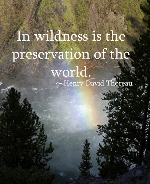 Henry David Thoreau Nature Quotes