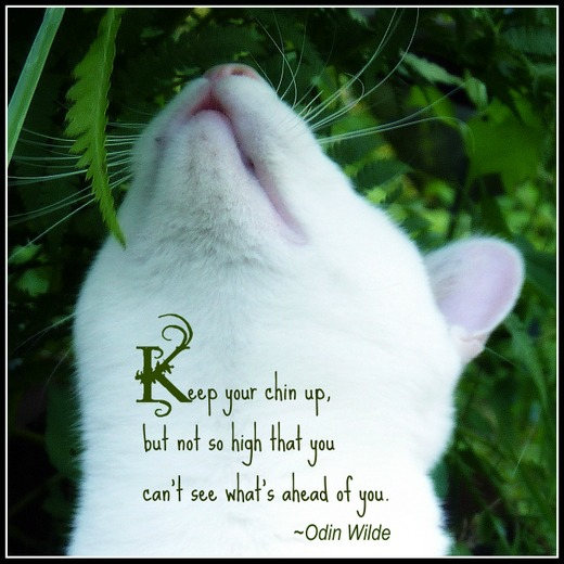 Keep Your Chin Up, But Not So High That You Can't See What's Ahead Of You. - Odin Wilde ~ Cat Quotes