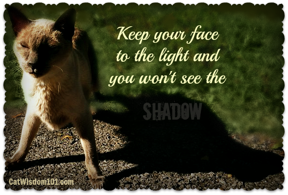 Keep Your Face To The Light And You Won't See The. ~ Cat Quotes