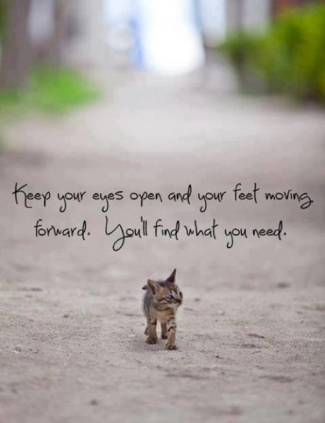 Know Your Eyes Open And  Your Feet Moving Forward. You'll Find What You Need.  ~ Cat Quotes