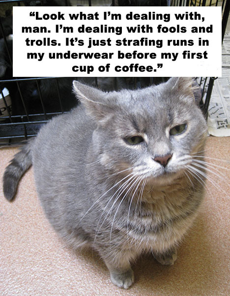""" Look What I'm Dealing With, Man. I'm Dealing With Fools And Trolls. It's Just Strafing Runs In My Underwear Before My First Cup Of Coffee "" ~ Cat Quotes"