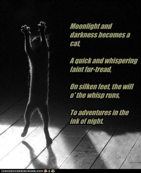 Moonlight And Darkness Becomes A Cat. A Quick And Whispering Faint Fur-Tread. On Silken Feet, The Will O' The Whisp Runs. To Adventures In The Ink Of Night.