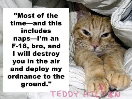 """ Most Of The Time- And This Includes Naps-I'm An F-18, Bro, And I Will Destroy You In The Air And Deploy My Ordnance To The Ground "" ~ Cat Quotes"