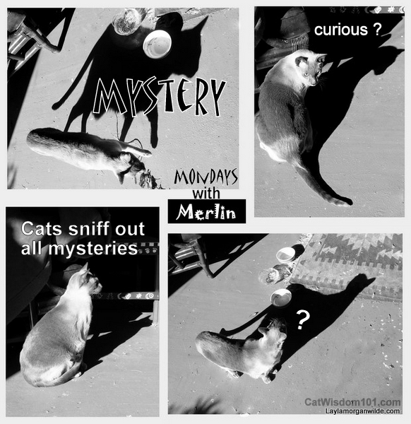Mystery Cats Quotes…