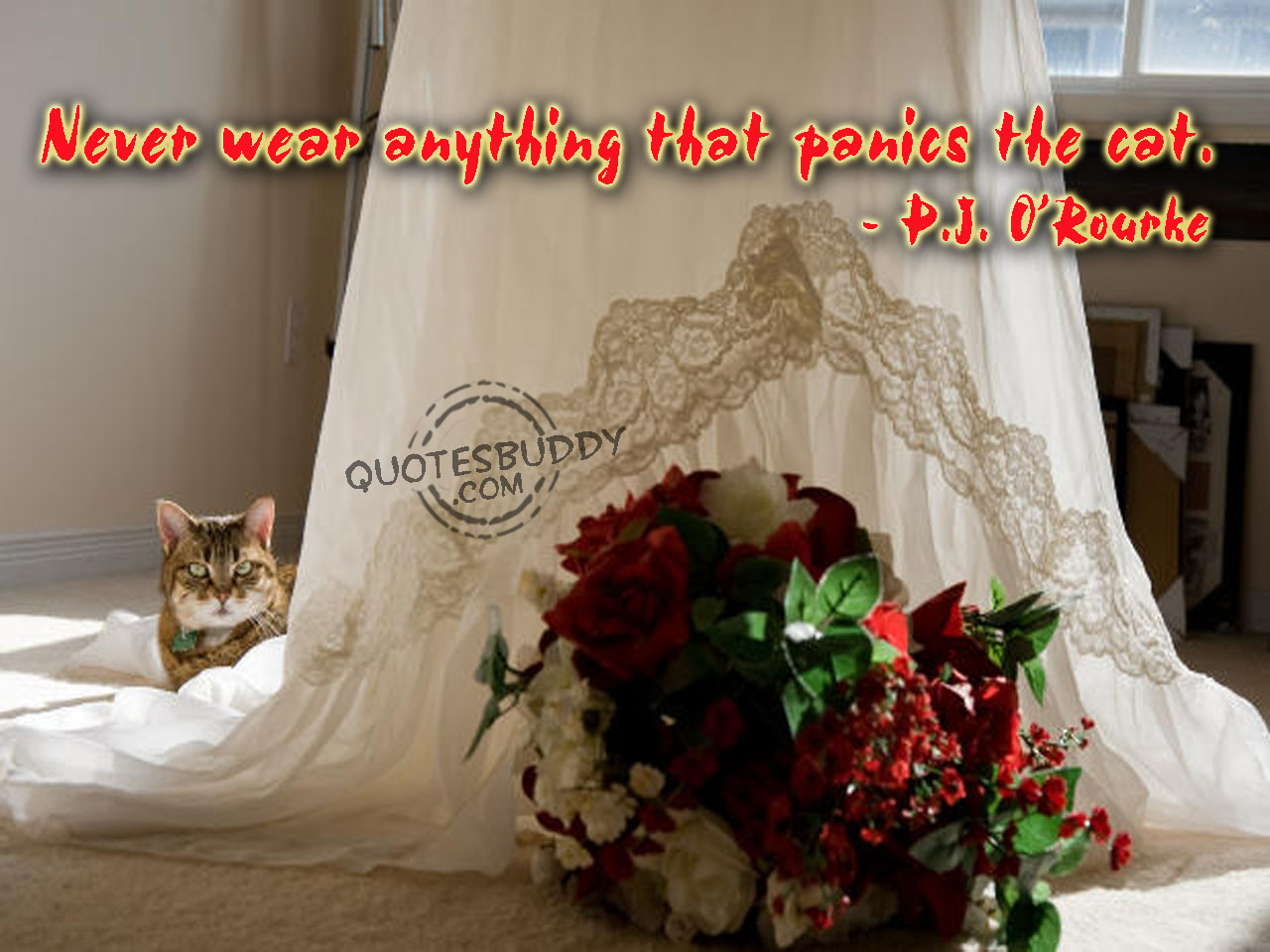 Never Wear Anything That Panics The Cat. - P.J. O'Rourke ~ Clothing Quotes