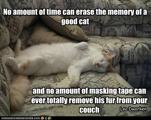 No Amount Of Time Can Erase The Memory Of A Good Cat And No Amount Of Masking Tape Can Ever Totally Remove His Fur From Your Couch. - Leo Dwarken