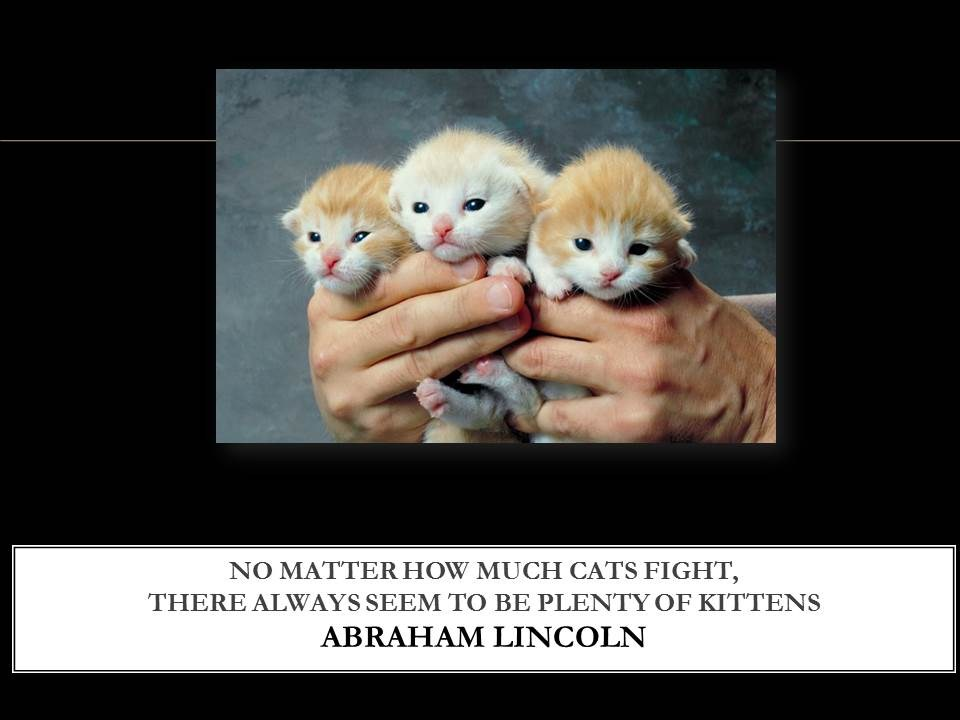 No Matter How Much Cats Fight, There Always Seem To Be Plenty Of Kittens. - Abraham Lincoln