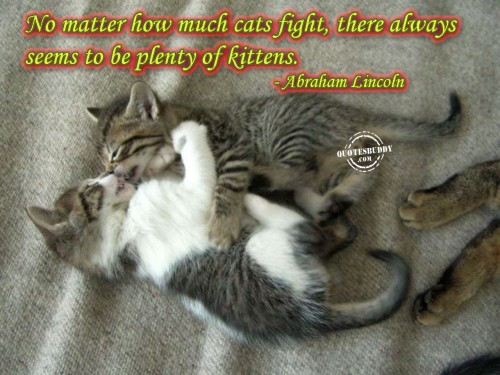 No Matter How Much Cats Fight, There Always Seems To Be Plenty Of Kittens. - Abraham Lincoln
