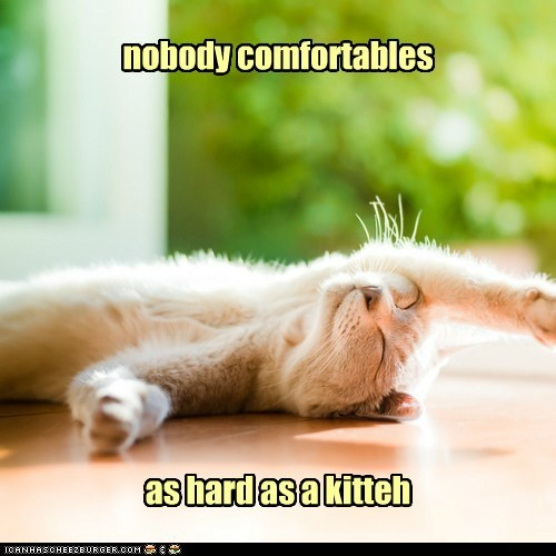 Nobody Comfortables As Hard As A Kitten. ~ Cat Quotes