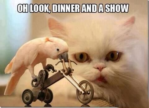 Oh Look, Dinner And A Show. ~ Cat Quotes