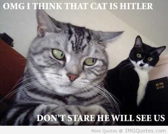 Omg I Think That Cat Is Hitler Don't Stare He Will See Us.