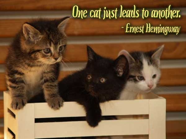 One Cat Just Leads To Another. - Ernest Hemingway