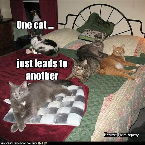 One Cat, Just Leads To Another.