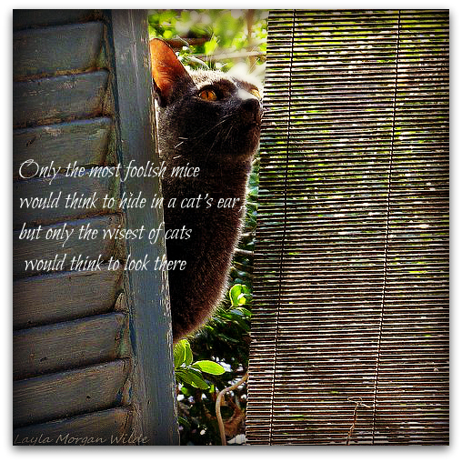 Only The Most Foolish Mice Would Think To Hide In A Cat's Ear, But Only The Wisest Of Cats Would Think To Look There.