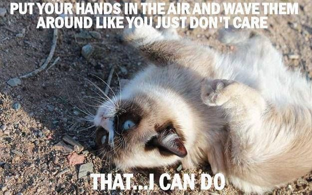 Put Your Hands In The Air And Wave Them Around Like You Just Don't Care That, I Can Do. ~ Cat Quotes