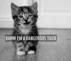 Raww I'm A Dangerous Tiger. ~ Cat Quotes