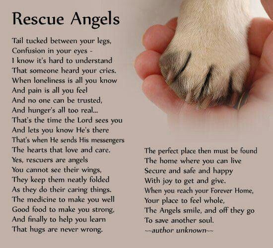 Rescue Angels…