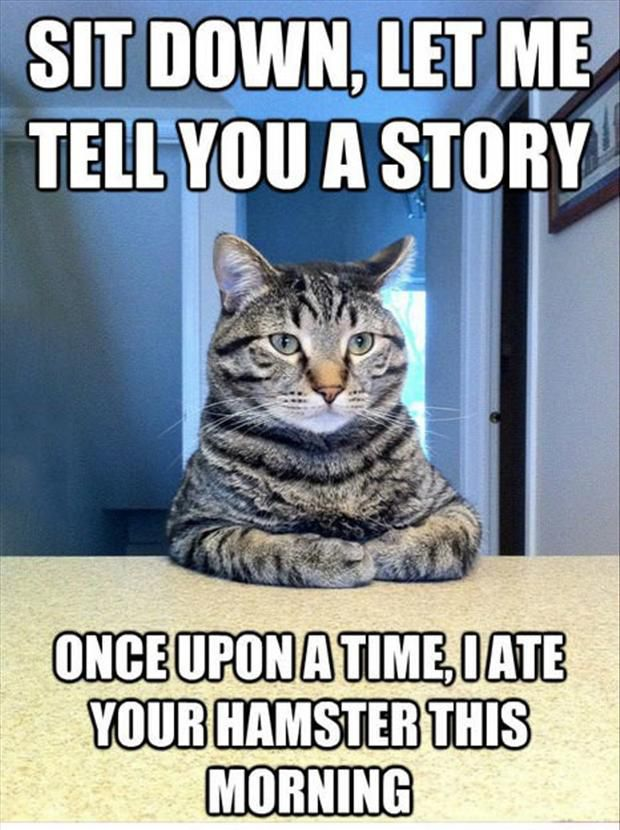 Sit Down, Let Me Tell You A Story Once Upon A Time, I Ate Your Hamster This Morning. ~ Cat Quotes