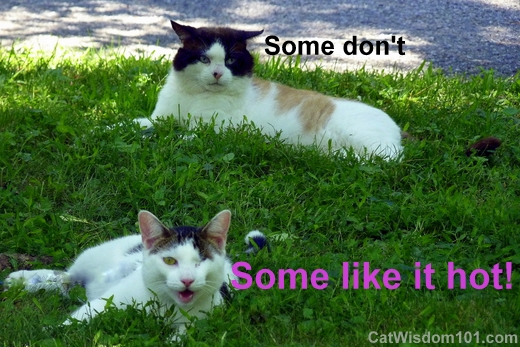 Some Don't, Some Like It Hot. ~ Cat Quotes
