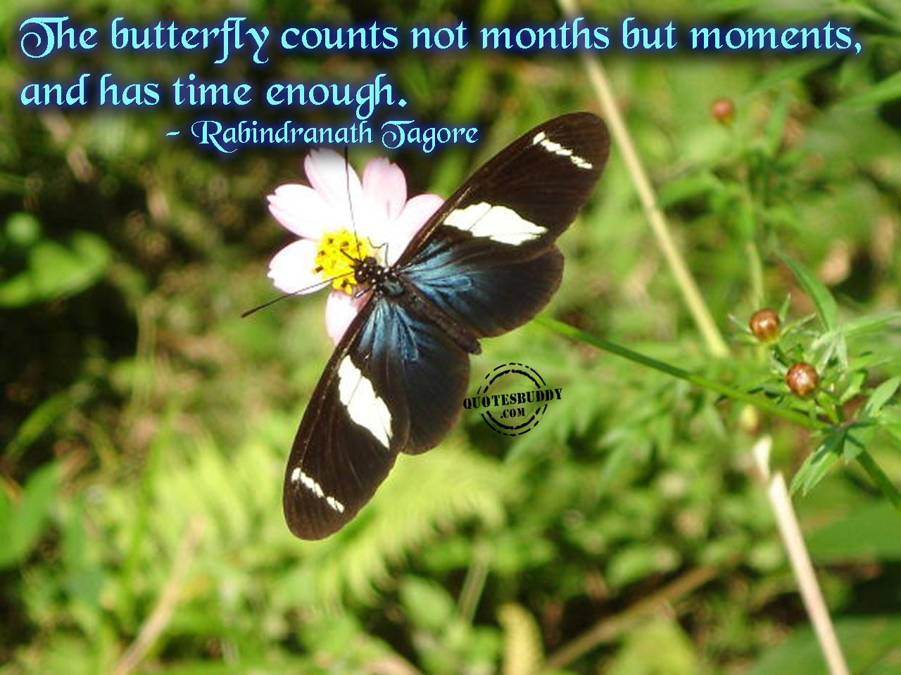 The Butterfly Counts Not Months But Moments, And Has Time Enough. - Rabindranath Tagore.