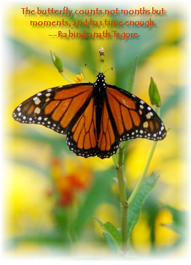 The Butterfly Counts Not Months But Moments, And Has Time Enough - Rabindranath Tagore