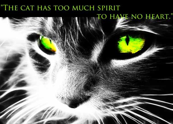 The Cat Has Too Much Spirit To Have No Heart.