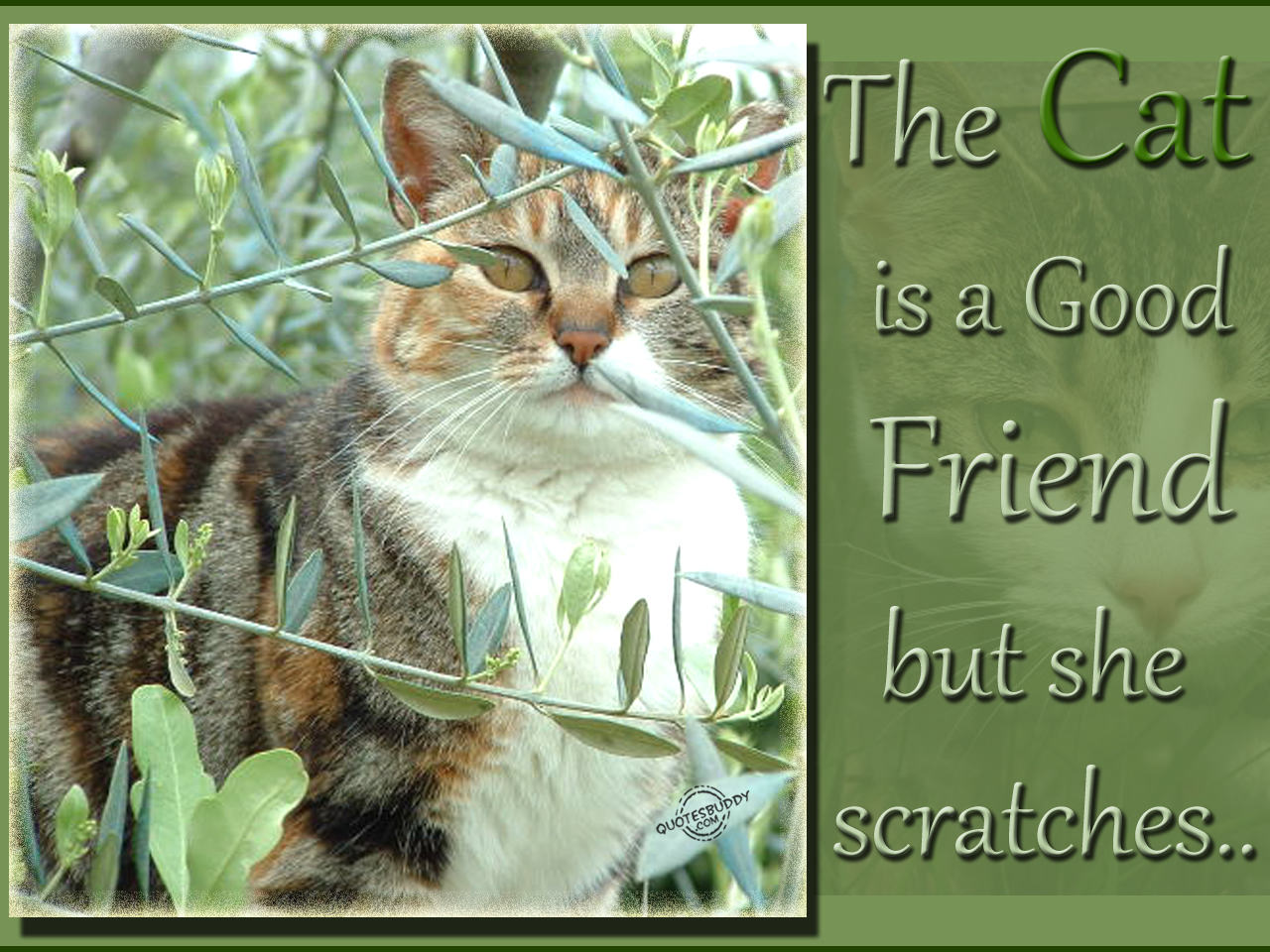 The Cat Is A Good Friend But She Scratches  - Quotespictures com