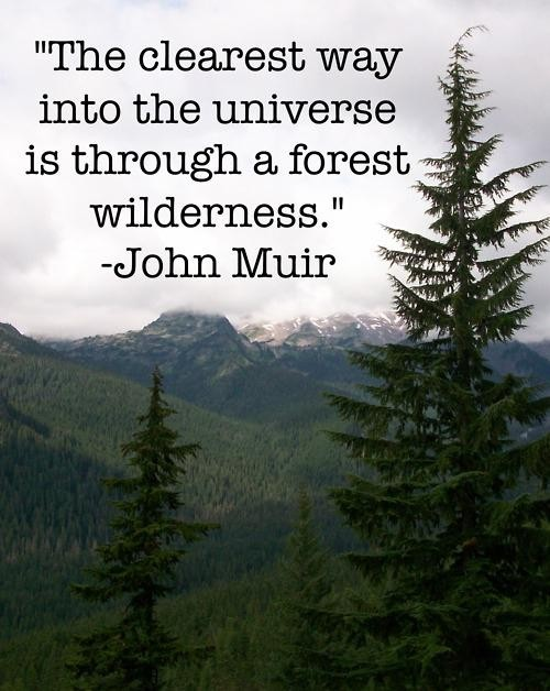 """ The Clearest Way Into The Universe Is Through A Forest Wilderness "" - John Muir"