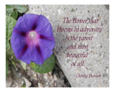 The Flower That Blooms In Adversity And Most Beautiful Of All - Chinese Proverb