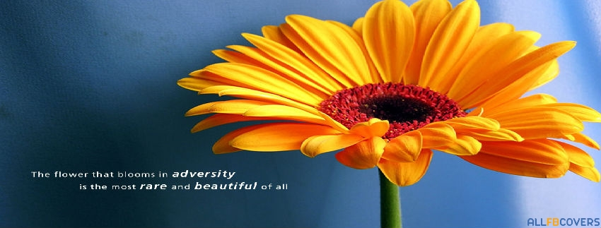 """"""" The Flower That Blooms In Adversity Is The Most Rare And Beautiful Of All """""""