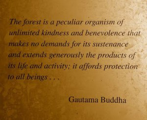 The Forest Is A Peculiar Organism Of Unlimited Kindness And Benevolence That Makes No Demands For Its Sustenance… ~ Buddhist Quotes