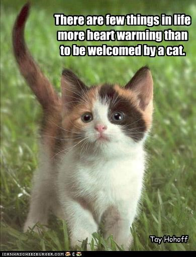 There Are Few Things In Life More Heart Warming Than To Be Welcomed By A Cat. - Tay Hohoff