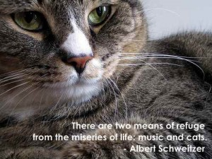 There Are Two Means Of Refuge From The Miseries of Life, Music And Cats. - Albert Schweitzer