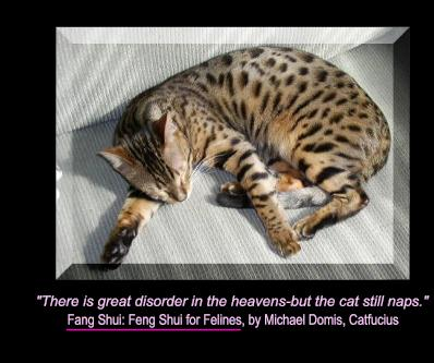 """"""" There Is Great Disorder In The Heavens-But The Cat Still Naps """""""