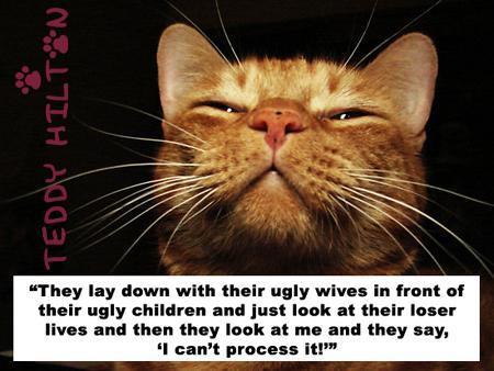 """"""" They Lay Down With Their Ugly Wives In Front Of Their Ugly Children And Just Look At Their Loser Lives And Then They Look At Me And They Say, ' I Can't Process It """"  ~ Cats Quotes"""