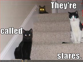 They're Called Stares. ~ Cat Quotes