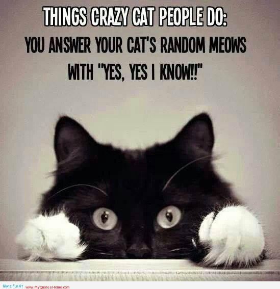 """Things Crazy Cat People Do, You Answer Your Cats Random Meows With """"Yes, Yes I Know """""""