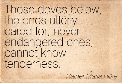 Those Doves Below, The Ones Utterly Cared For, Never Endangered Ones, Cannot Know Tenderness. - Rainer Maria Rilke ~ Adversity Quotes