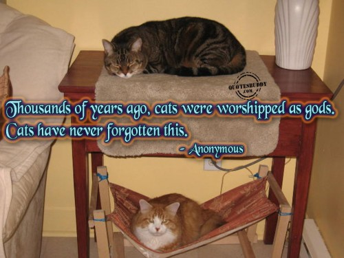 Thousands Of Years Ago, Cats Were Worshipped As Gods. Cats Have Never Forgotten This.