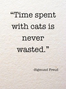 """"""" Time Spent With Cats Is Never Wasted """" - Sigmund Freud"""