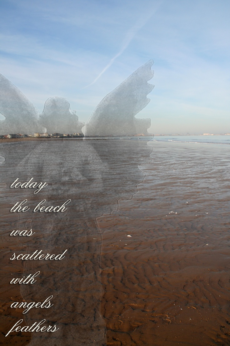Today The Beach Was Scattered With Angels Feathers.