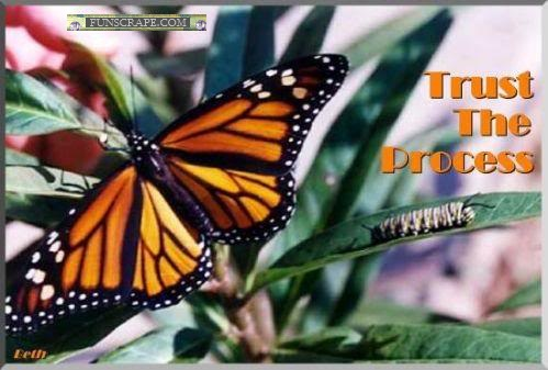 Trust The Process. ~ Butterfly Quote